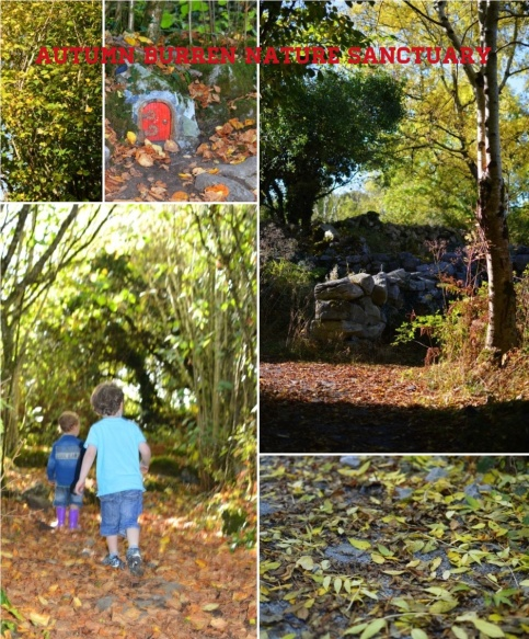autumn burren nature